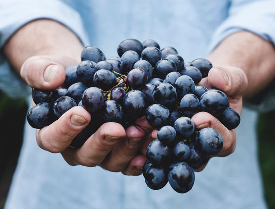 home-quienes-somos-frutas-castuo